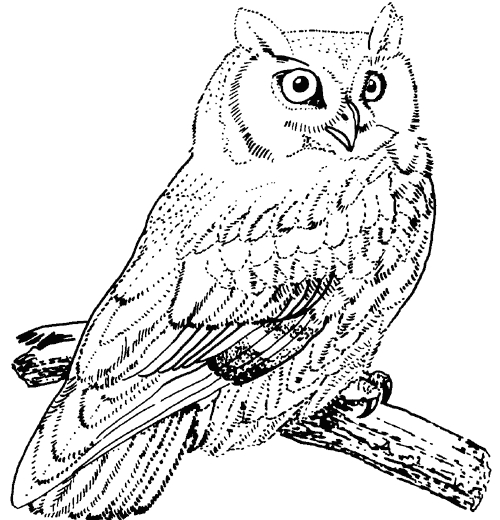 500x520 Great Horned Owl Coloring Pages Coloring Animals