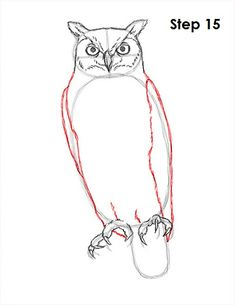 235x305 How To Draw A Great Horned Owl Step 4 Chicken And Bird Drawings