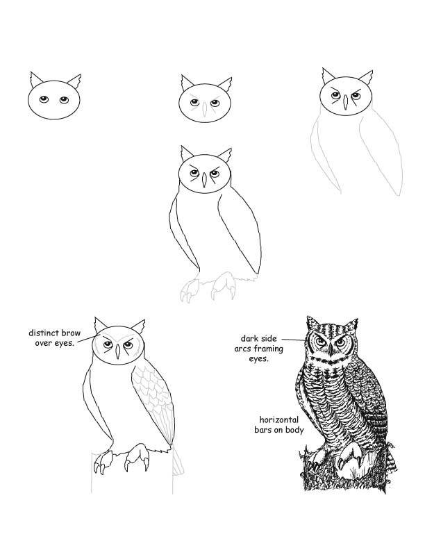 612x792 Owl.jpg