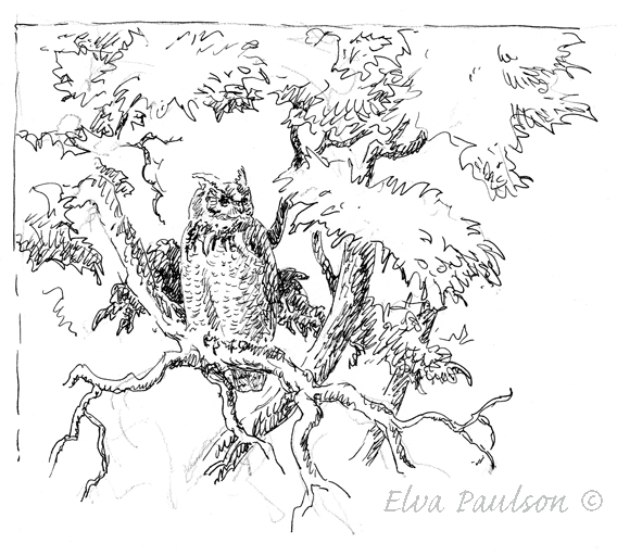 568x512 Elva's Field Notes Hanging Out With A Great Horned Owl