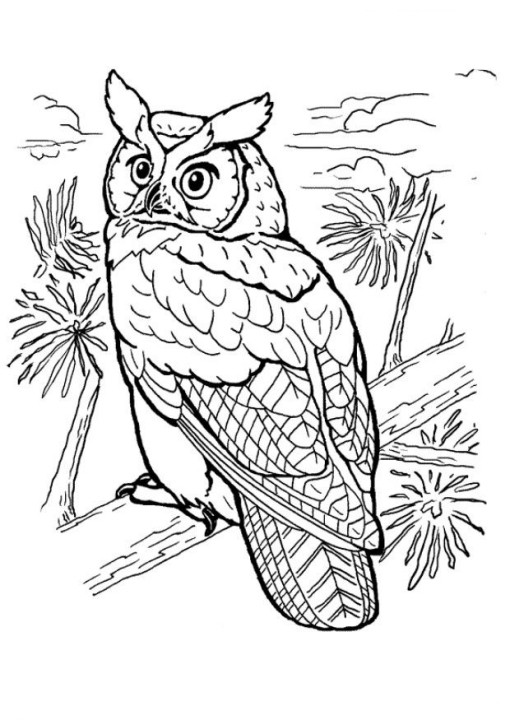 510x720 Great Horned Owl Coloring Page