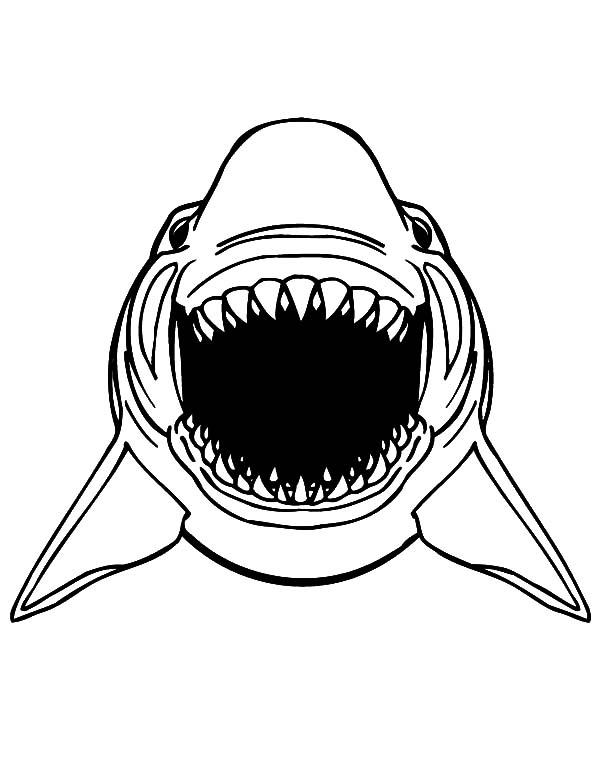 great white shark drawing at getdrawings com