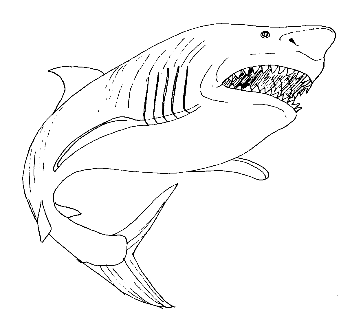 1216x1136 Draw Great White Shark Coloring Pages 99 For Sheets With