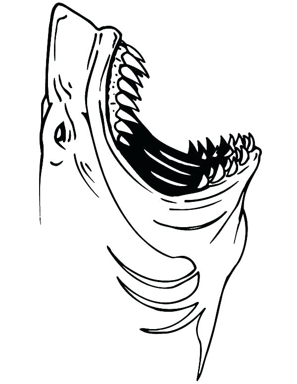 Great White Shark Outline Drawing at GetDrawings | Free ...