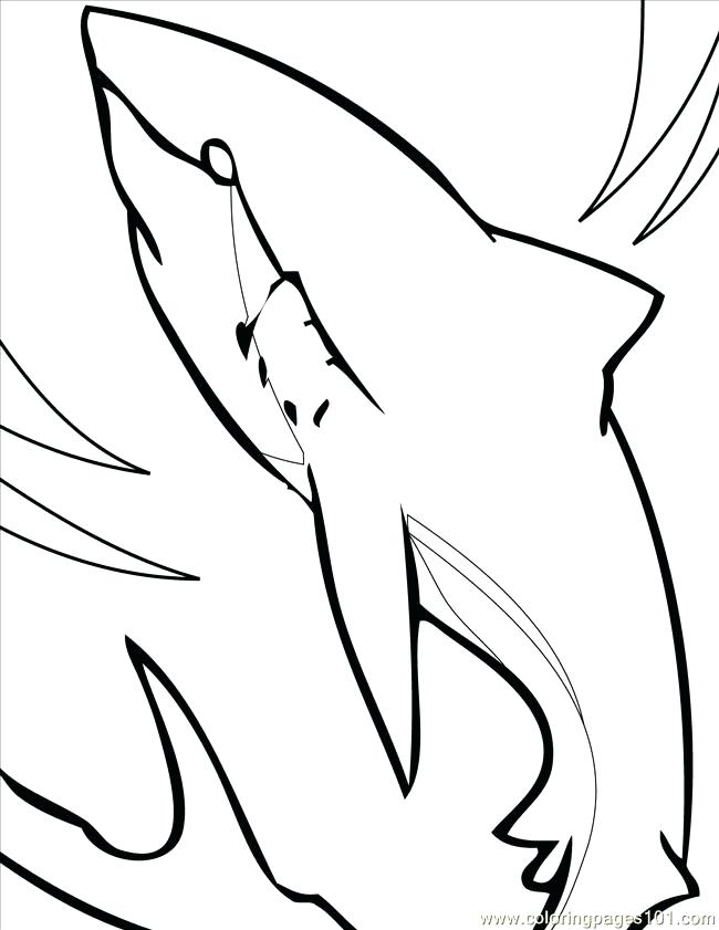 650x841 Great White Shark Coloring Pages Great White Shark Coloring Pages