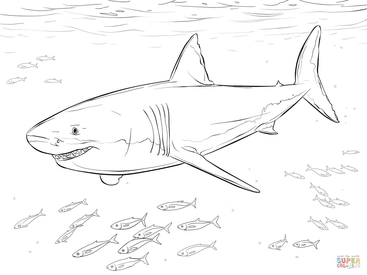 1199x899 Great White Shark With Pilot Fishes Coloring Page Free Printable