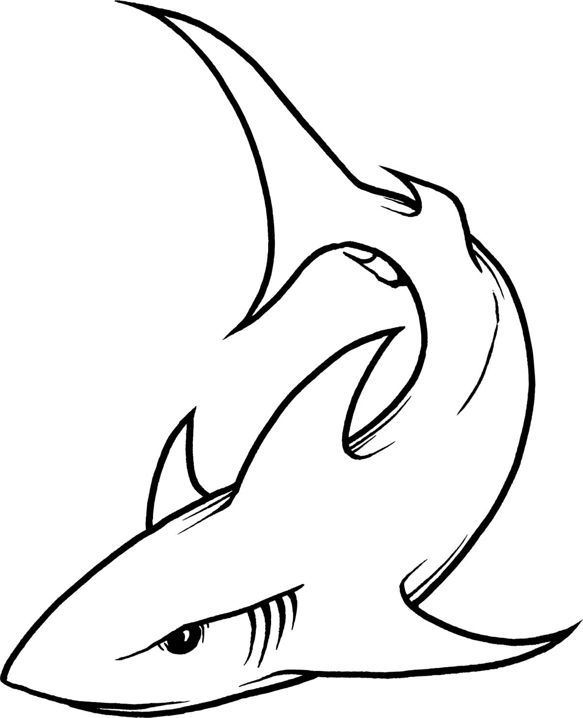 1200x1479 Outline Drawing Of A Shark