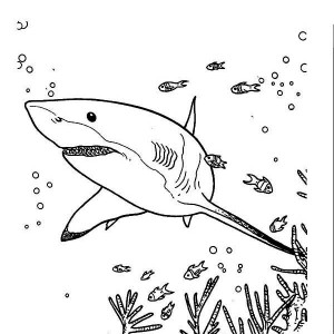 Great White Shark Outline Drawing at GetDrawings.com | Free for ...