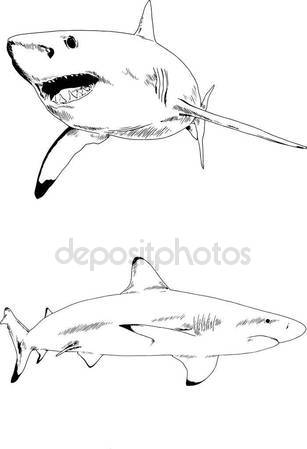 307x449 Set Vector Drawings Theme Marine Predators Sharks Drawn Ink Hand