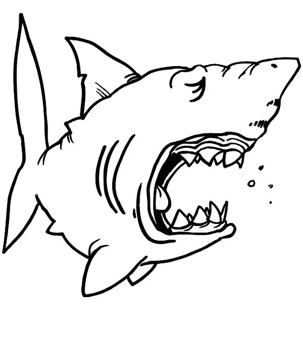 600x670 Shark To Color Great White Shark Shark Color By Number 1table.co