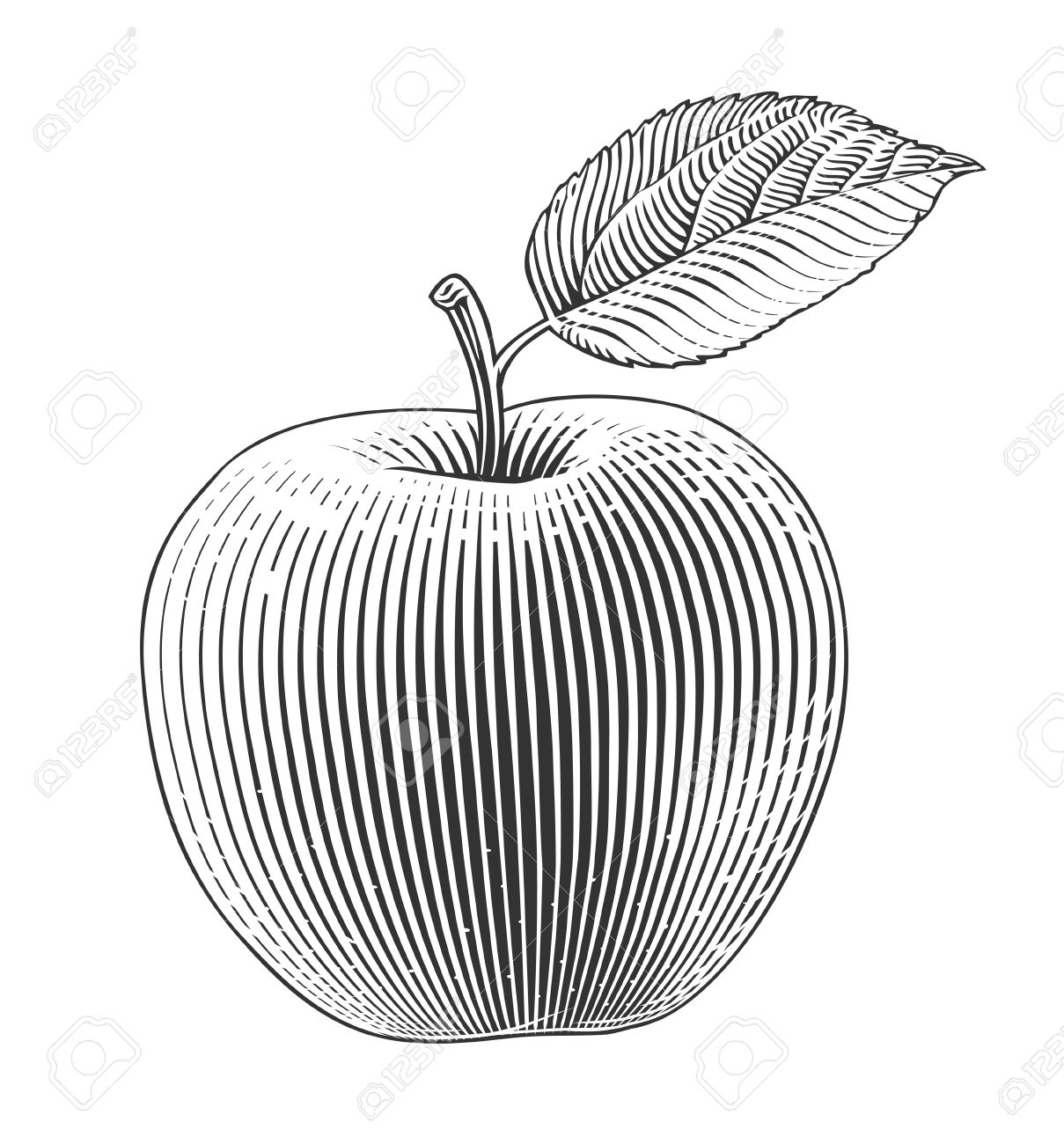 1209x1300 Apple On Transparent Background In Engraving Style Royalty Free
