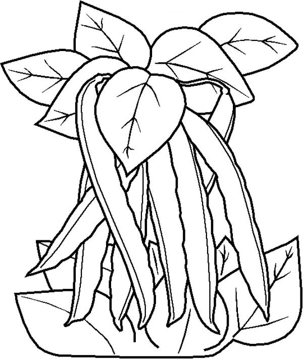 600x711 Free Coloring Pages Of Green Bean Happy Bean Day!