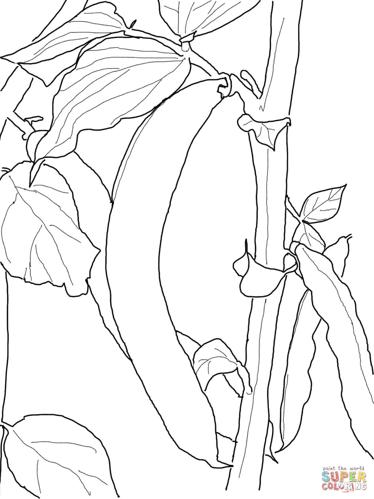 1200x1600 Green Bean Coloring Page Free Printable Coloring Pages
