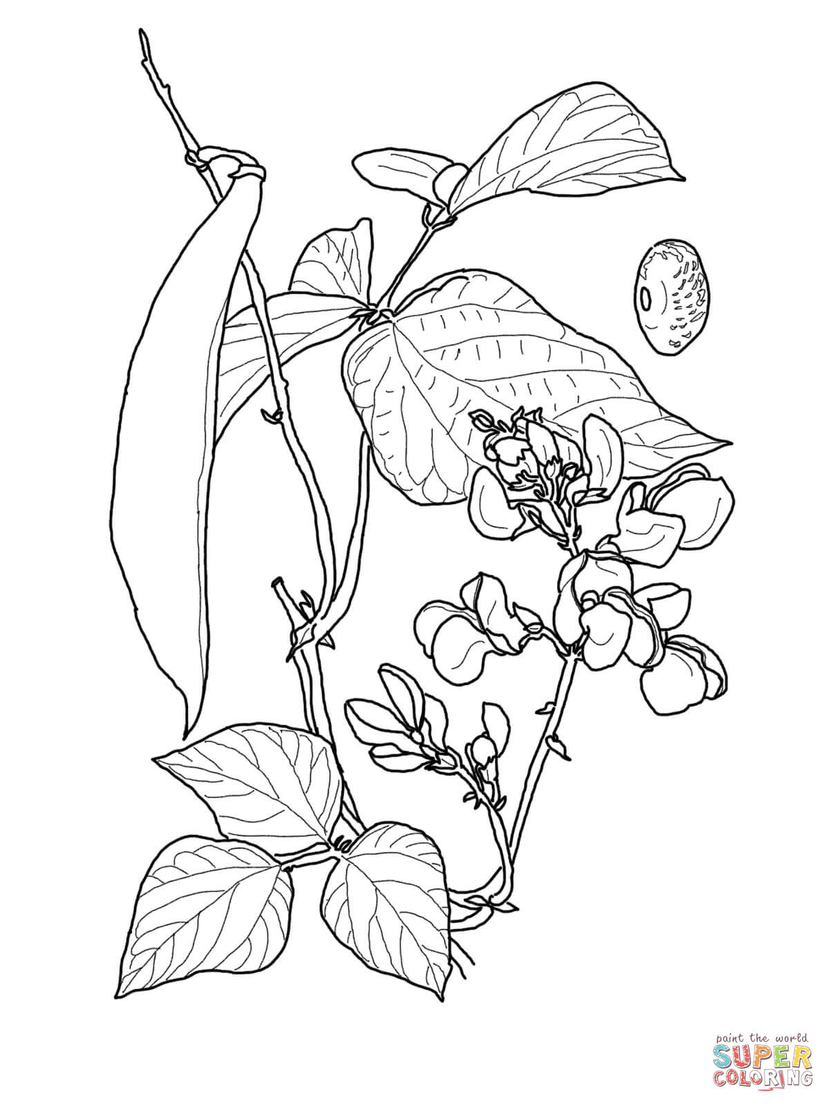 1200x1600 Runner Bean Coloring Page Free Printable Coloring Pages