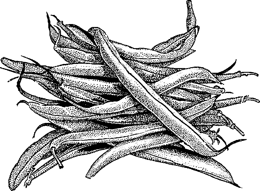 883x651 Beans Clipart Black And White