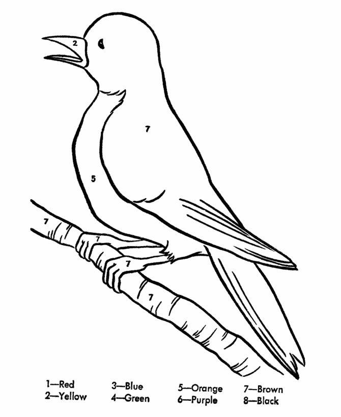 Green Bird Drawing