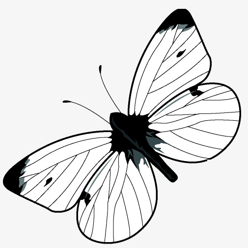 505x505 Ink Butterfly, Ink Butterfly Creative, Ink Butterfly Photos, Free