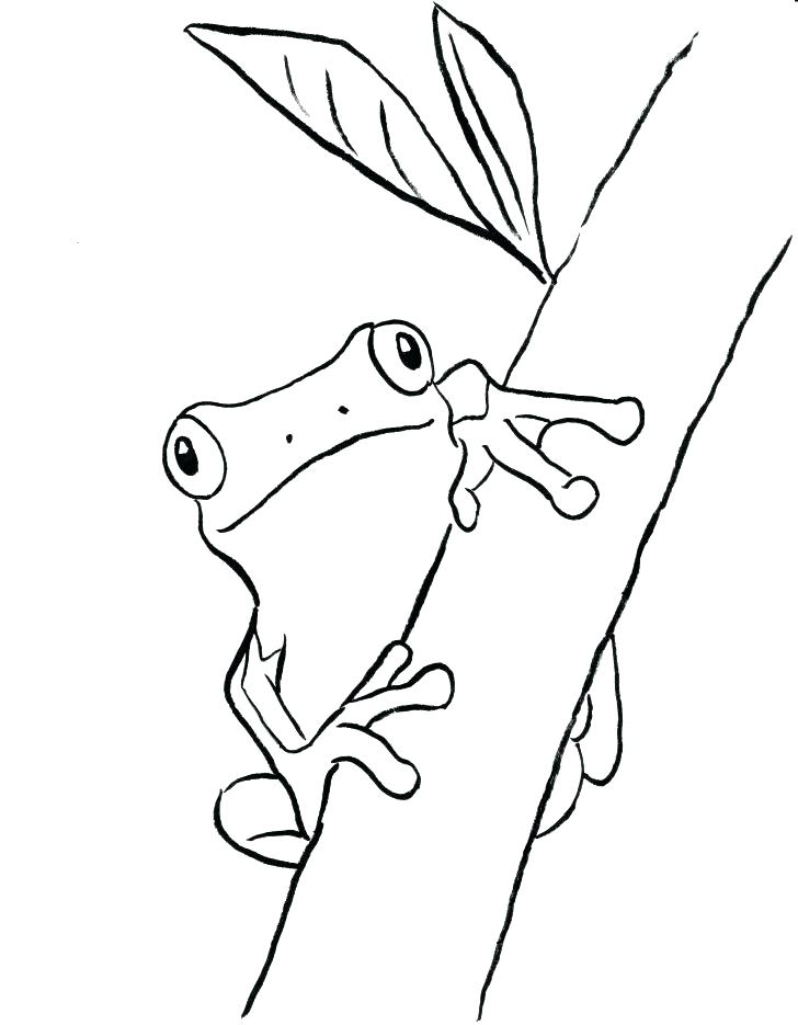 728x935 Red Eyed Tree Frog Coloring Page Tree Frog Outline Tree Frog