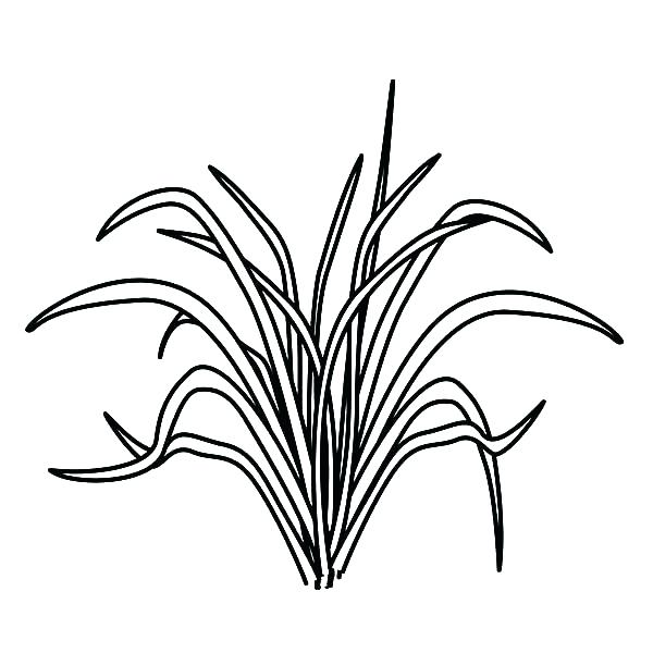 green grass drawing at getdrawings com free for personal use green