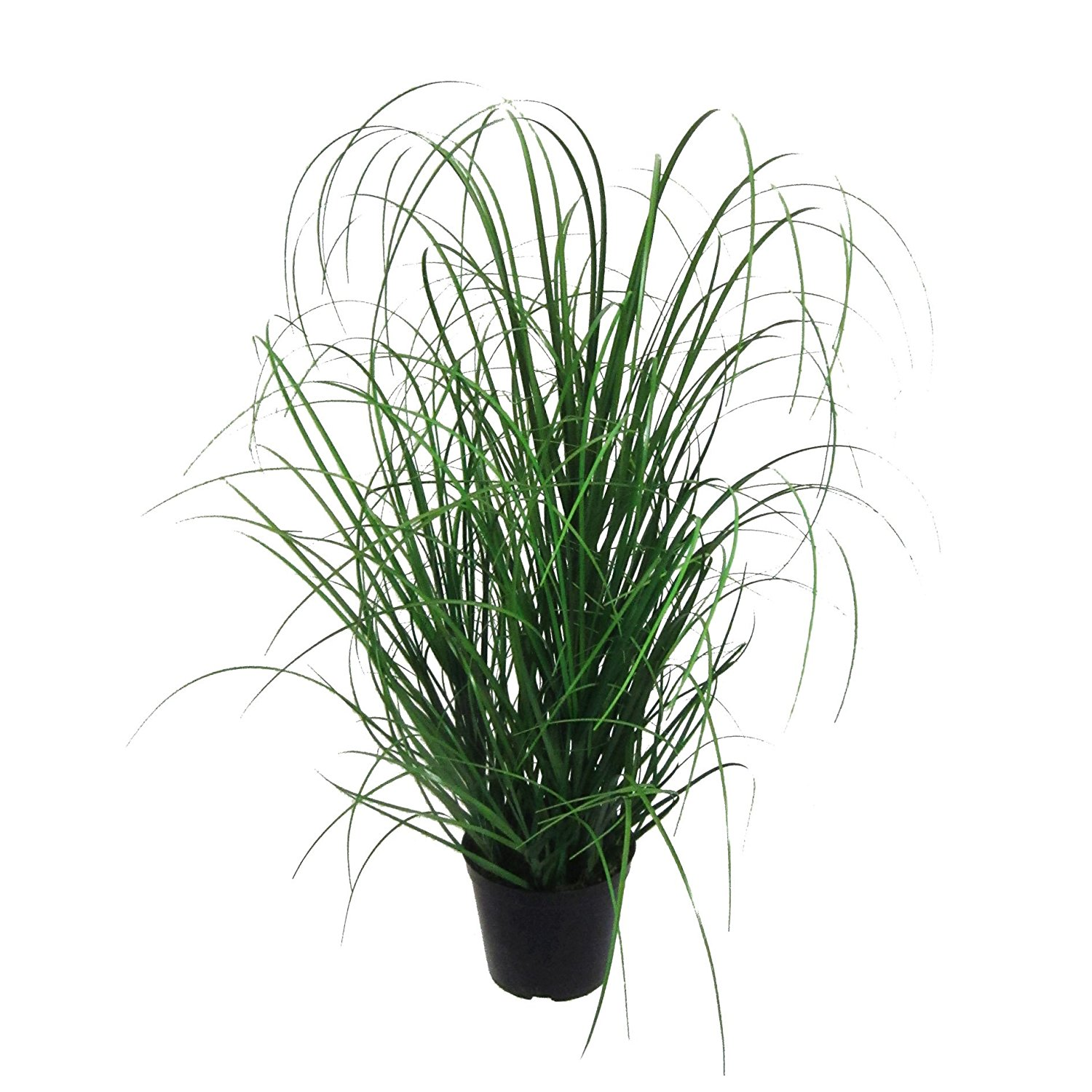 1500x1500 Buy Artificial Plant, Grass Plant Including Pot, 27, 5 By