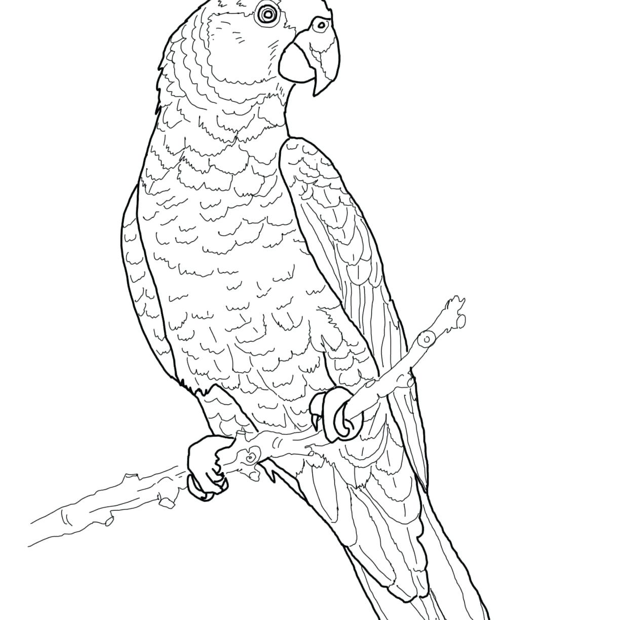 Green Parrot Drawing at GetDrawings.com   Free for personal use ...
