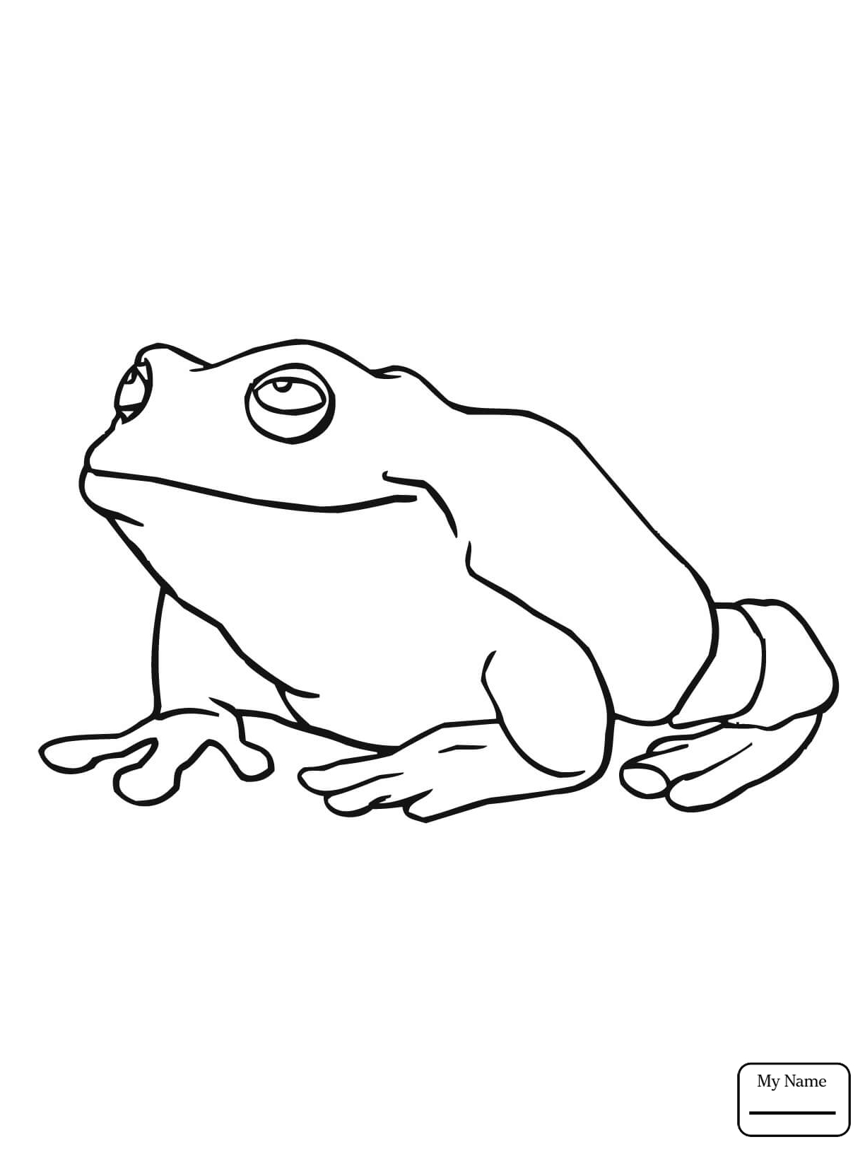1224x1632 Coloring Pages Amphibian American Green Tree Frog