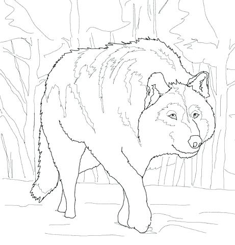 461x480 Gray Wolf Coloring Page Grey Wolf Coloring Pages Gray Wolf