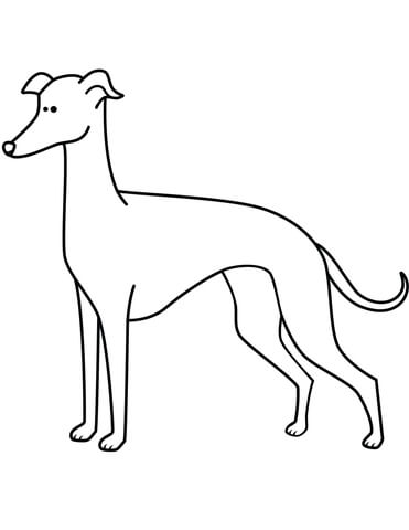 371x480 Funny Greyhound Coloring Page Free Printable Coloring Pages