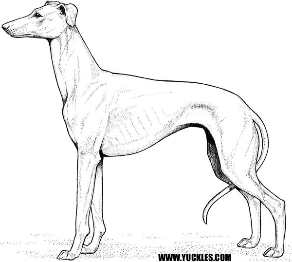 600x538 Greyhound Coloring Page By Yuckles!