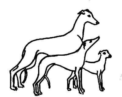 400x317 Whippet History
