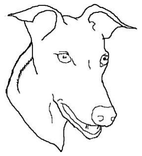 289x316 Greyhound Head Study Outline