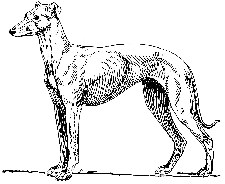 2150x1760 Greyhounds