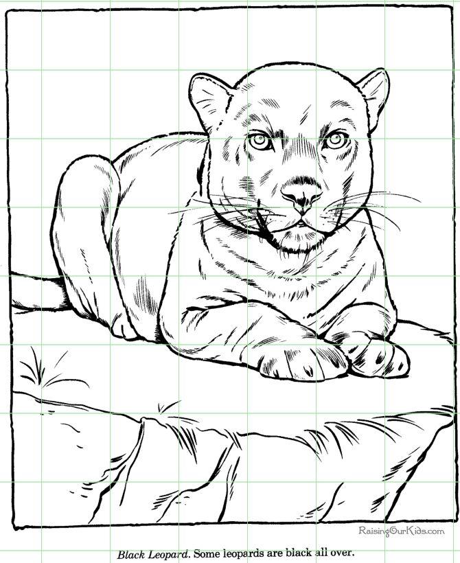 Grid Drawing Portrait