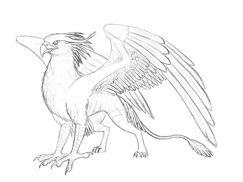 Griffin drawing at free for personal use for Griffon coloring page