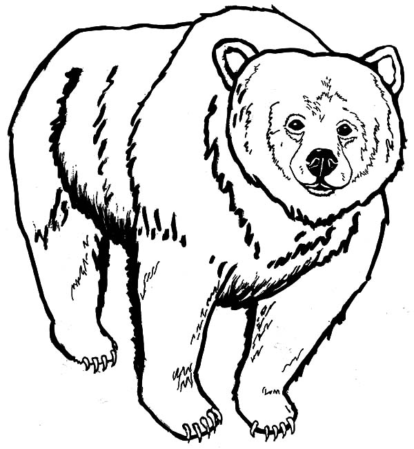 600x650 Glamorous Grizzly Bear Coloring Page 32 For Your Coloring For Kids