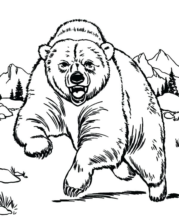 600x727 Grizzly Bear Coloring Pages 85 Also Coloring Page Of A Bear Polar