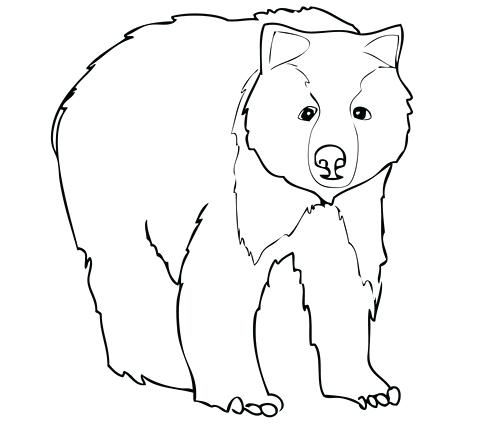 480x428 Grizzly Bear Coloring Pages As Awesome Click To See Printable