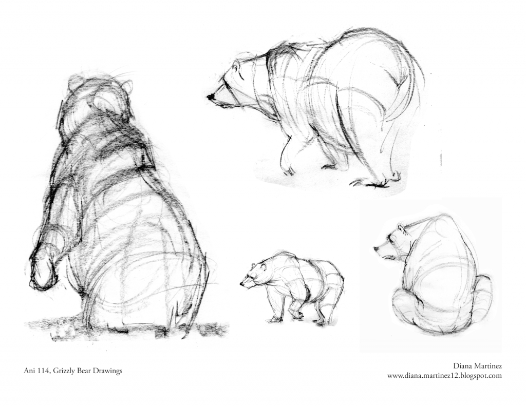 1024x791 How To Draw A Grizzly Bear Diana39s Sketch Blog More Grizzlies