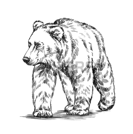 445x450 Black And White Engrave Ink Draw Isolated Vector Grizzly Bear