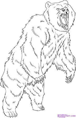 290x450 Grizzly Bear Coloring Pages How To Draw A Grizzly Bear, Step By
