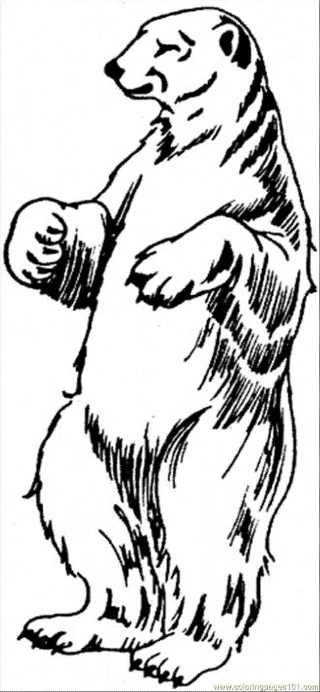 650x1404 Amazing Polar Bear Tattoo Designs