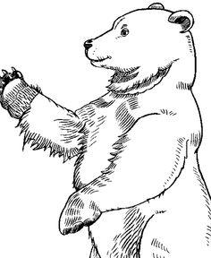 236x288 Alaskan Grizzly Bear Coloring Page Preschool