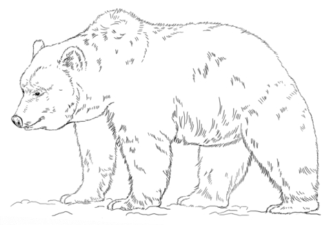 480x327 Grizzly Bear Coloring Page