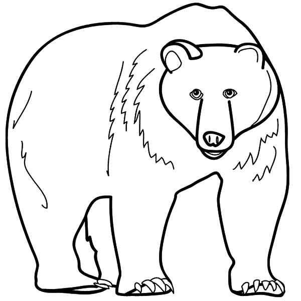 600x601 Grizzly Bear Coloring Pages 1959692