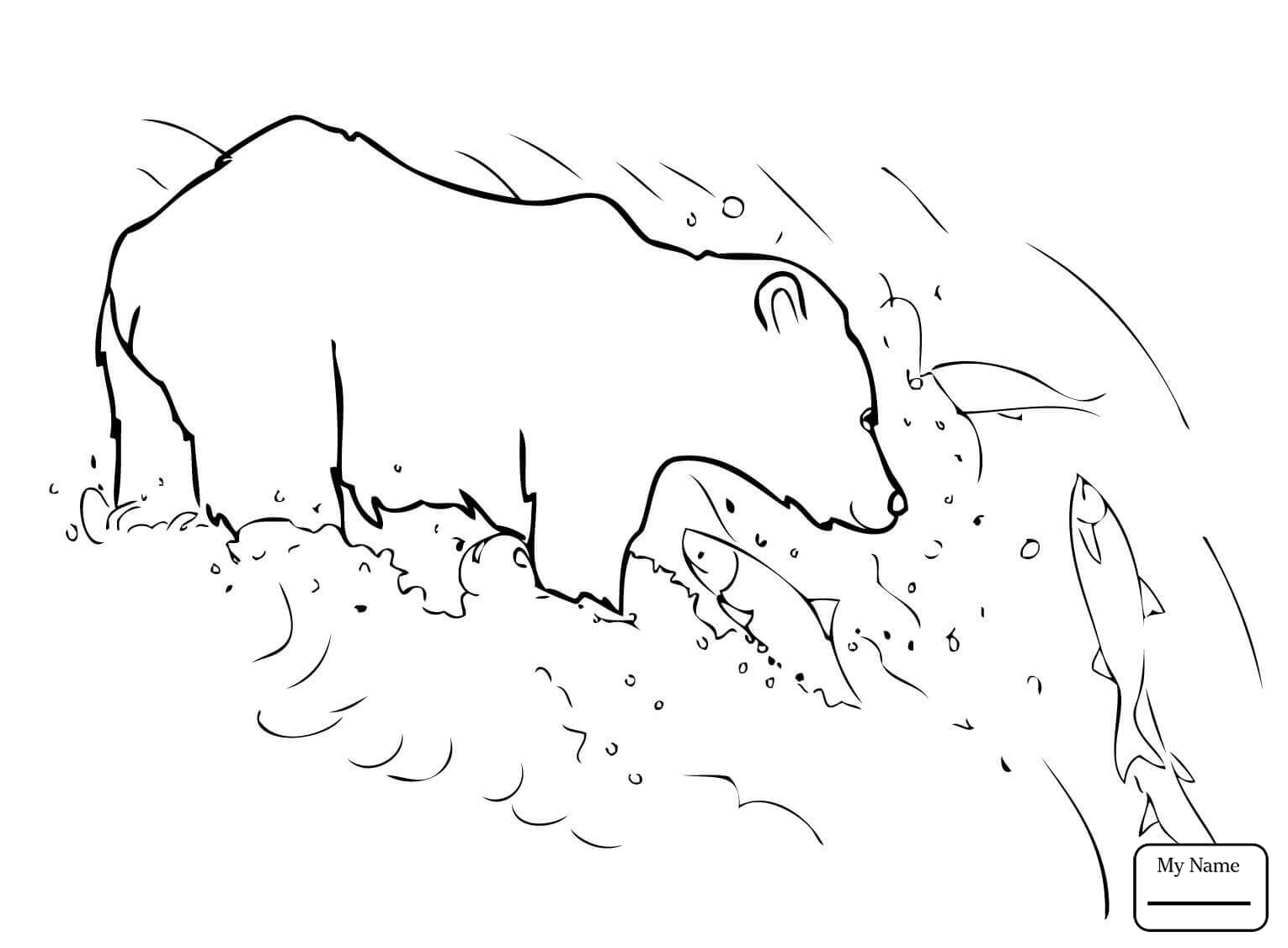 Grizzly Bear Drawing Step By Step