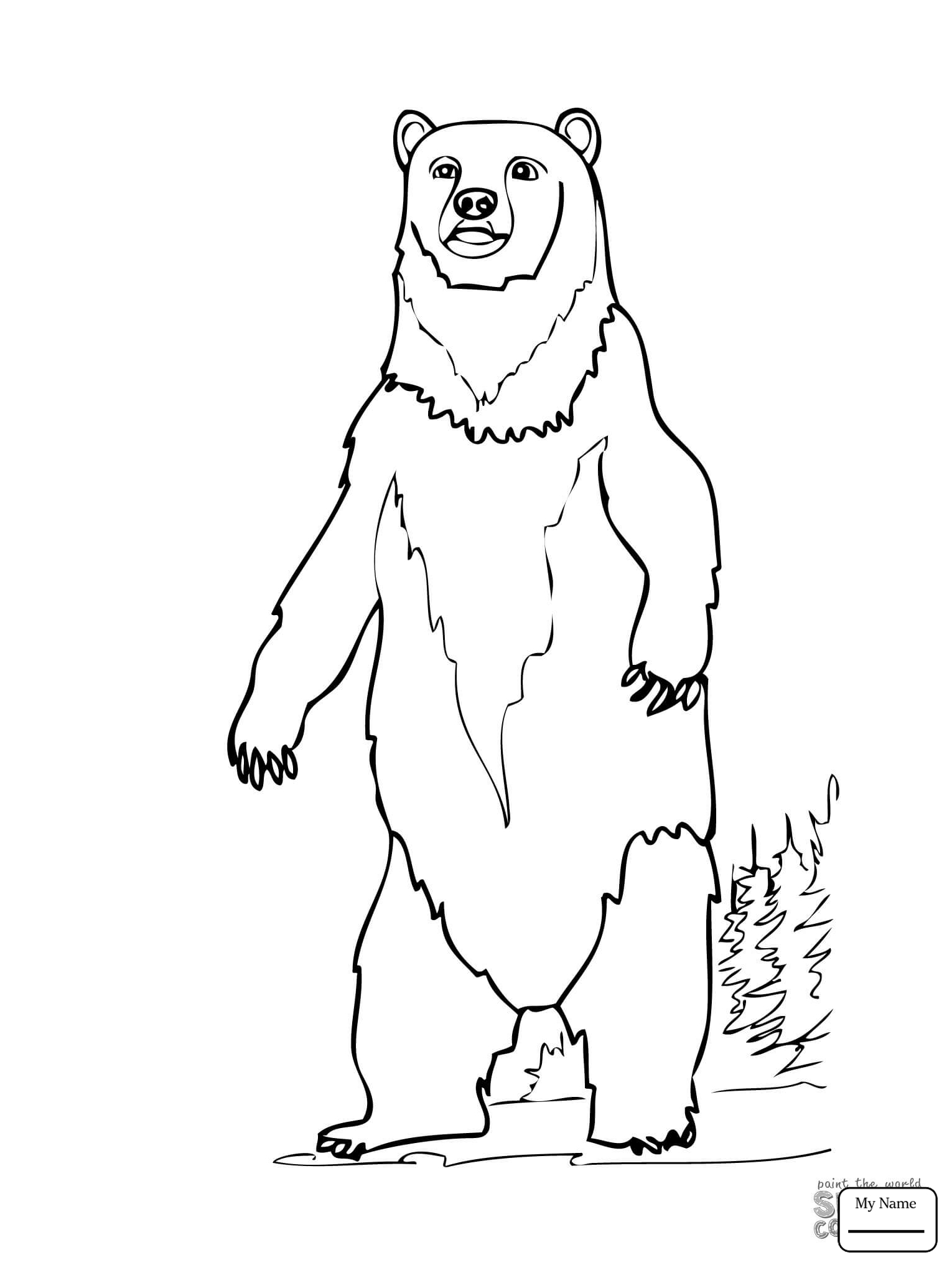 Grizzly Bear Drawing Step By Step at GetDrawings.com | Free for ...