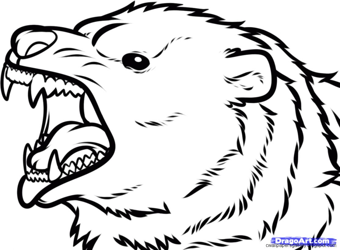 1113x821 Bear Face Drawing Wallpapers Gallery