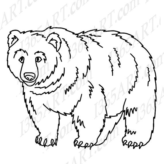 Grizzly Bear Face Drawing