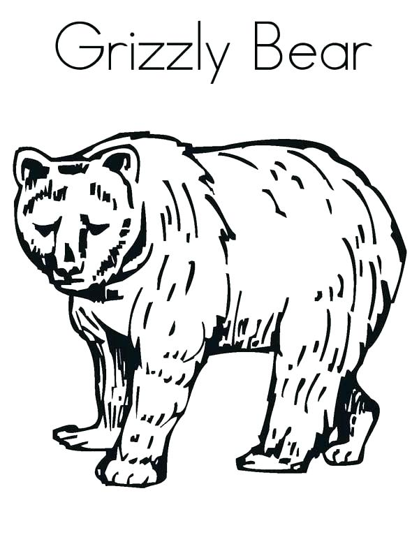 600x776 Black Bear Coloring Pages Grizzly Bear Coloring Pages Enormous