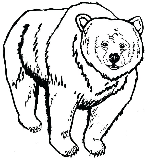 600x650 Grizzly Bear Coloring Pages 29 Plus Pin Drawn Grizzly Bear Fishing